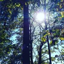 The sun shining through trees in Washington State